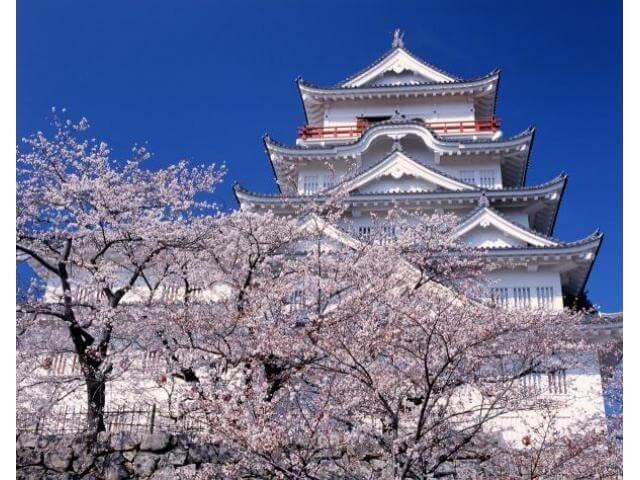 福山城の桜